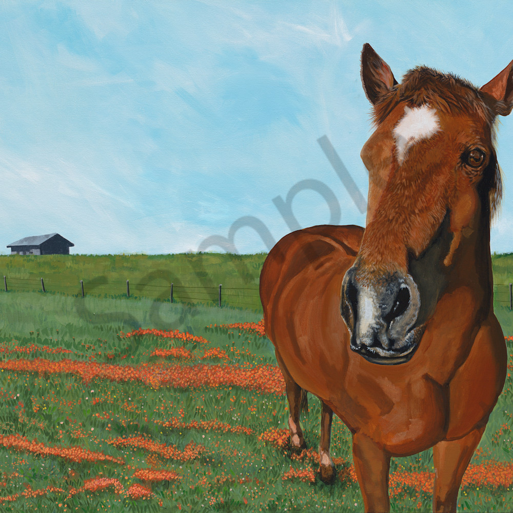 A horse of course 40x30 dqabln