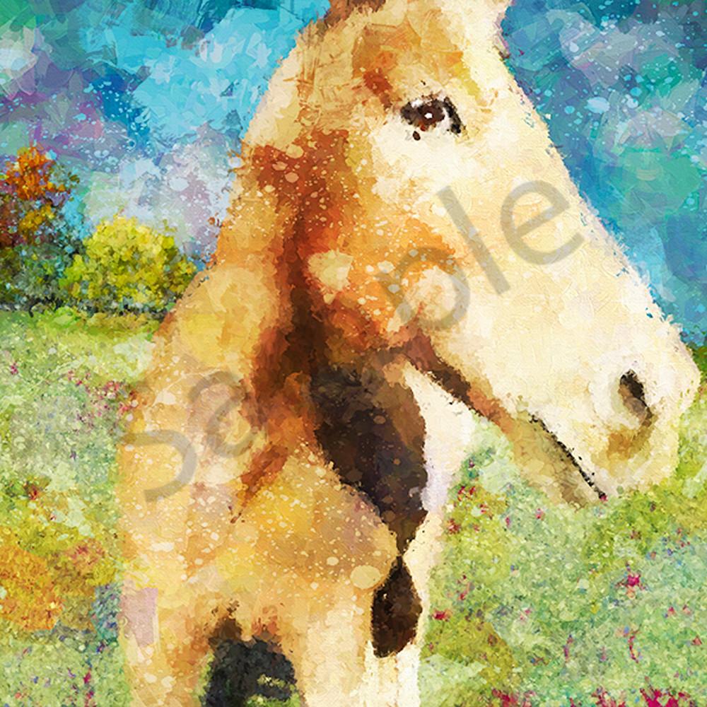 Painted pony uspusv