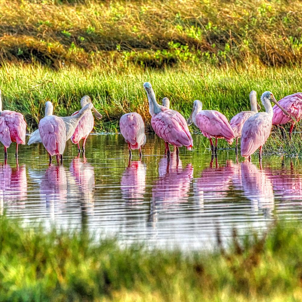 Rosy reflection photocolor copy gtmxrr