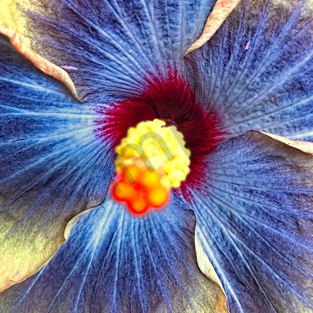 Hibiscus flower website bhzfft