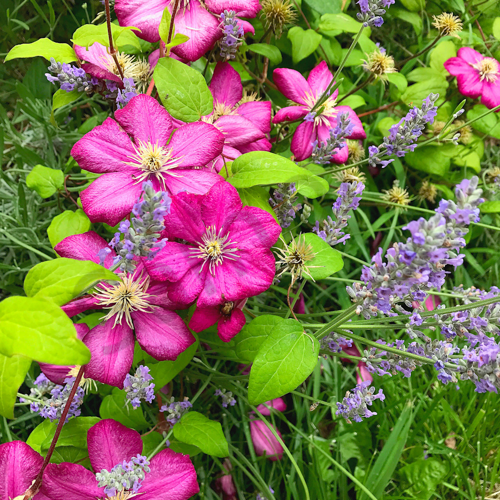 Summer flowers website ohjz5z