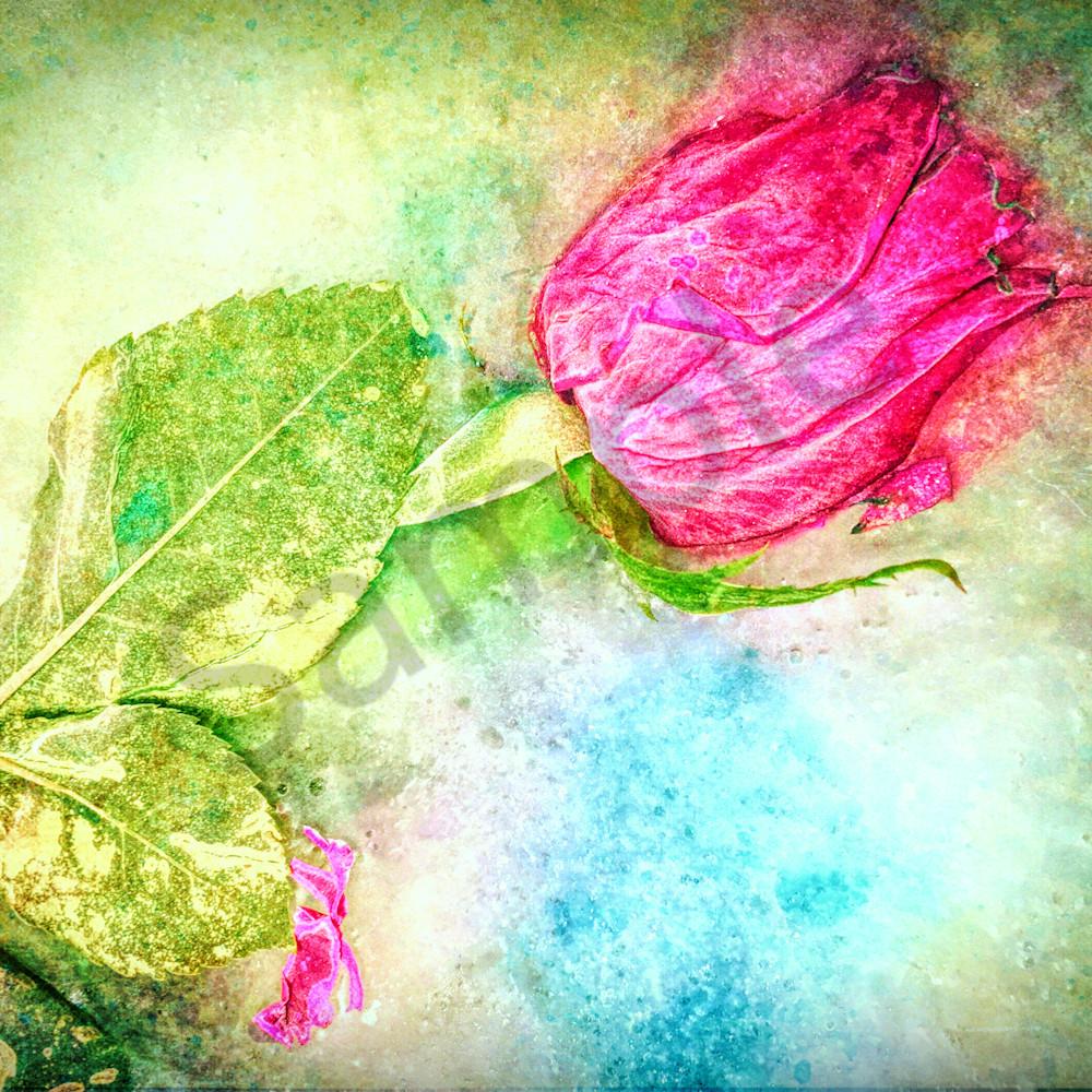 Frozen rose website ulvrzb