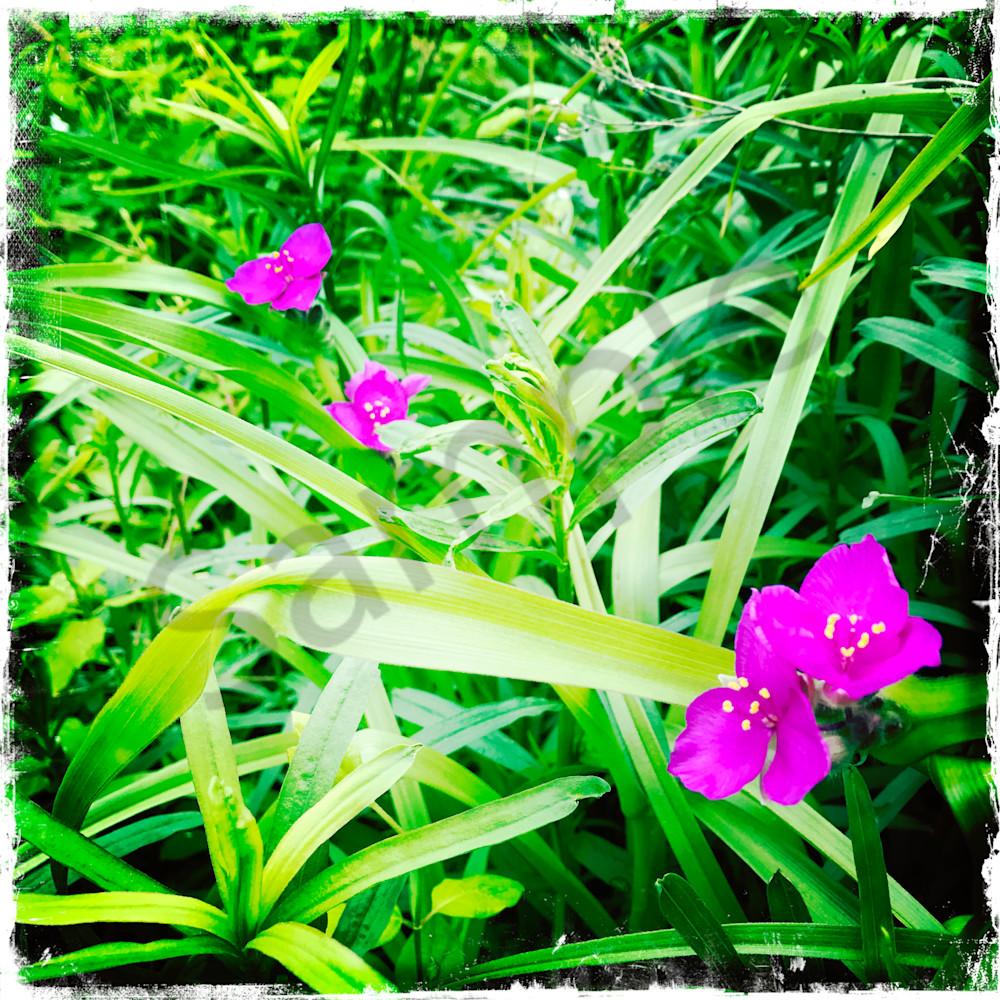 Purple in green m94u5o