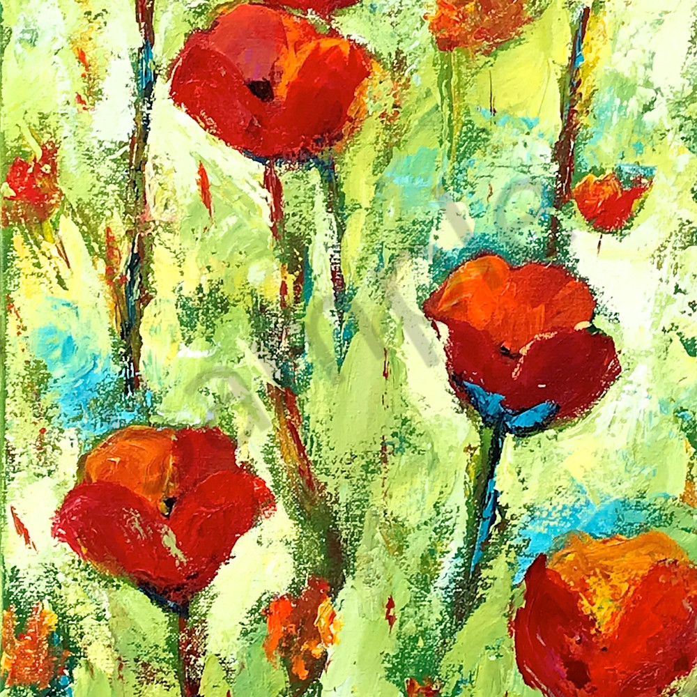 Red poppies 2018 lyvu5d