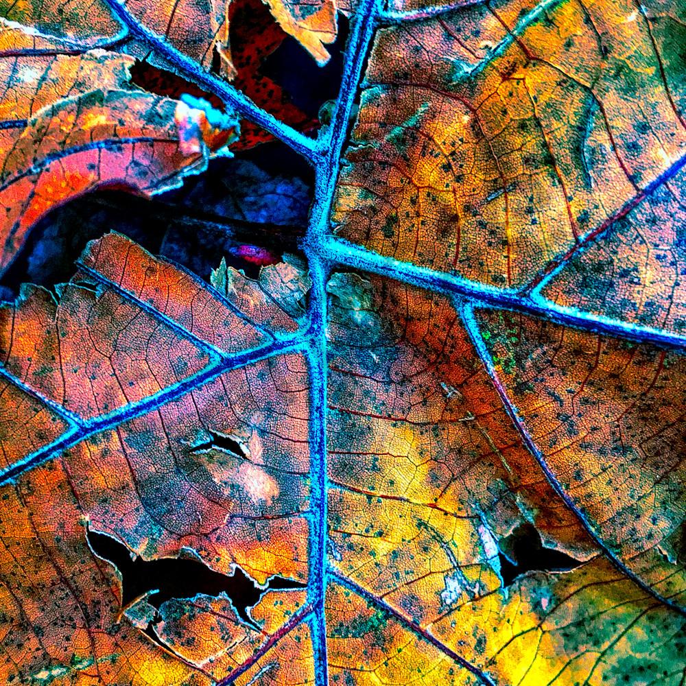 Leaf decay website lzesvq