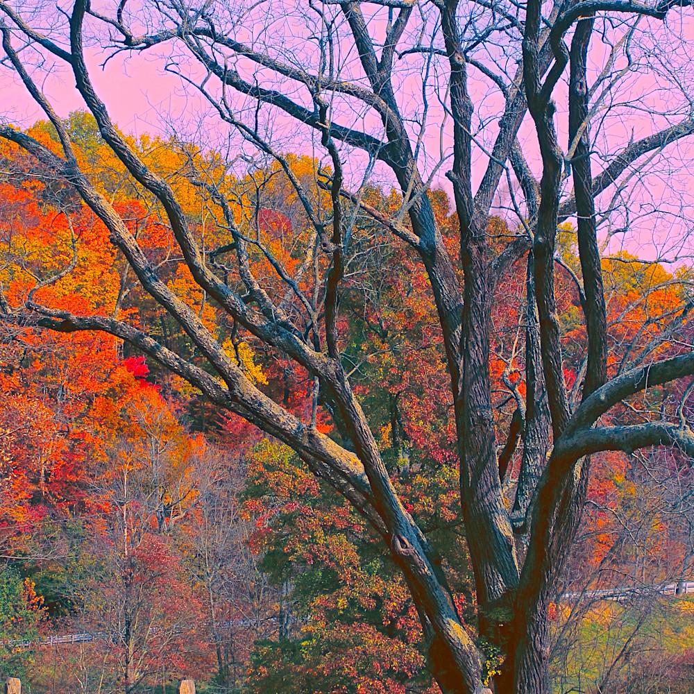 Old tree valley forge ijtepk