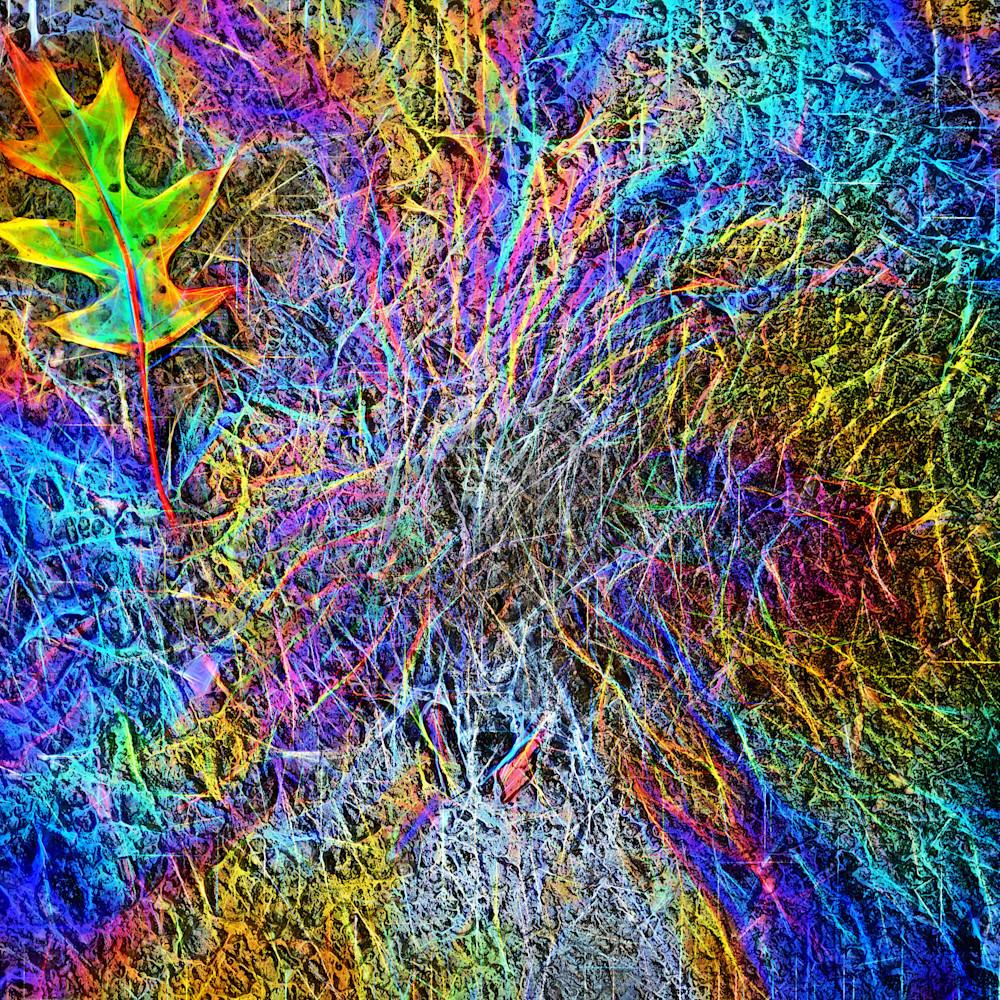 Leaf and oil on pavement n1o8ea
