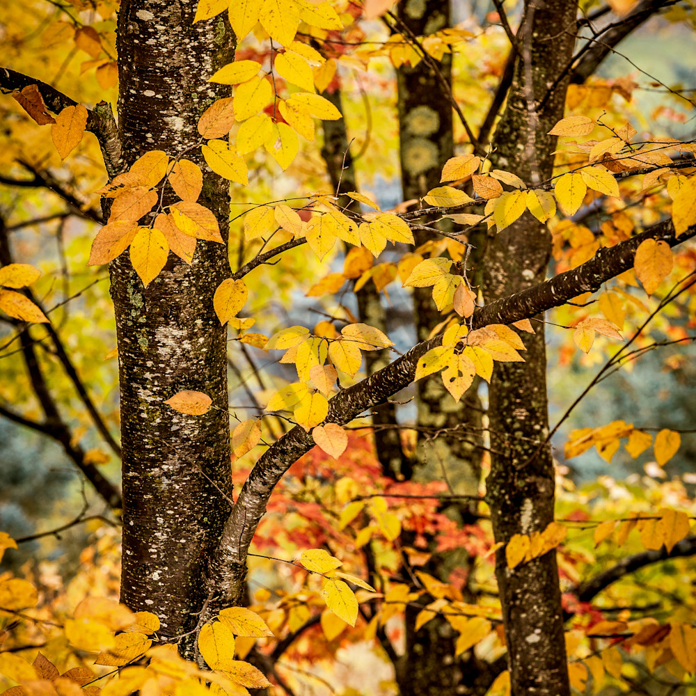 Autumn leaves ujqcne
