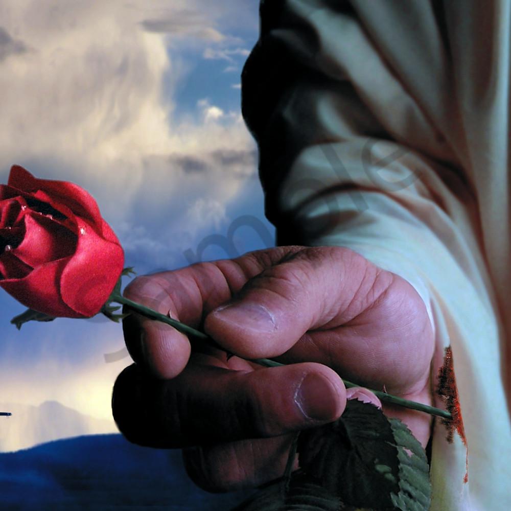The rose by bill stephens ydfwny