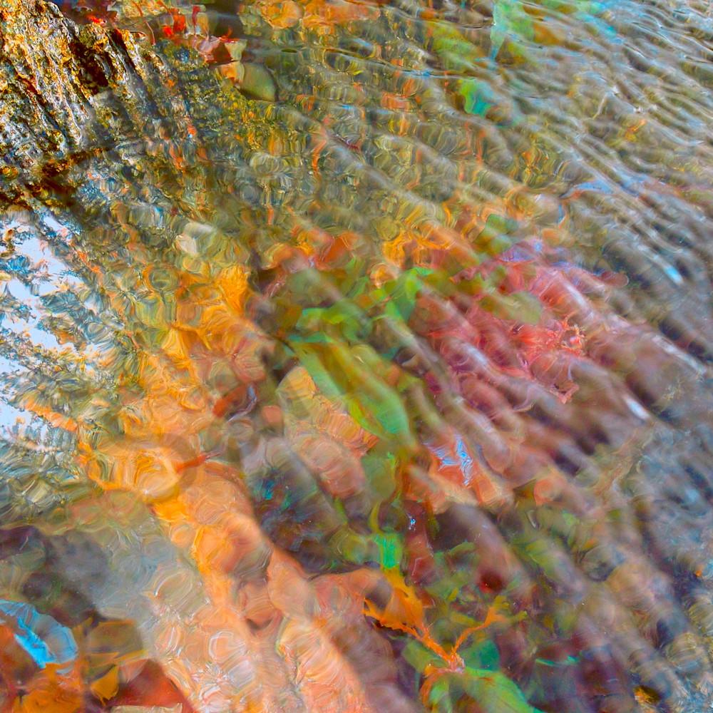 Tidal pool and coral website cyfv40
