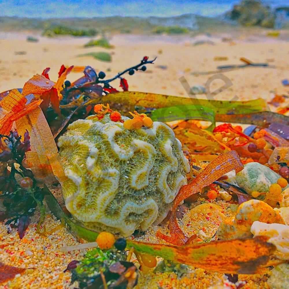 Coral on beach website qcxw5u
