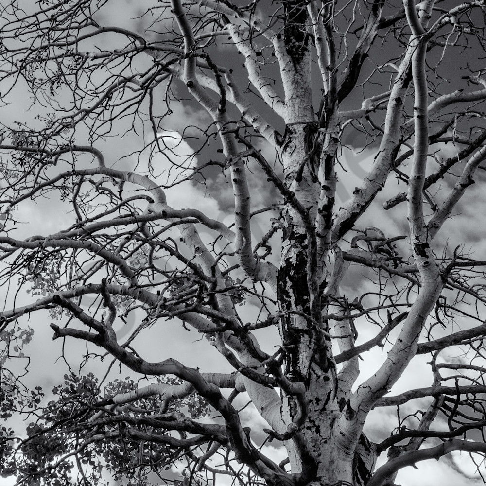 Tree clouds   boulder mountain utah ngikh0