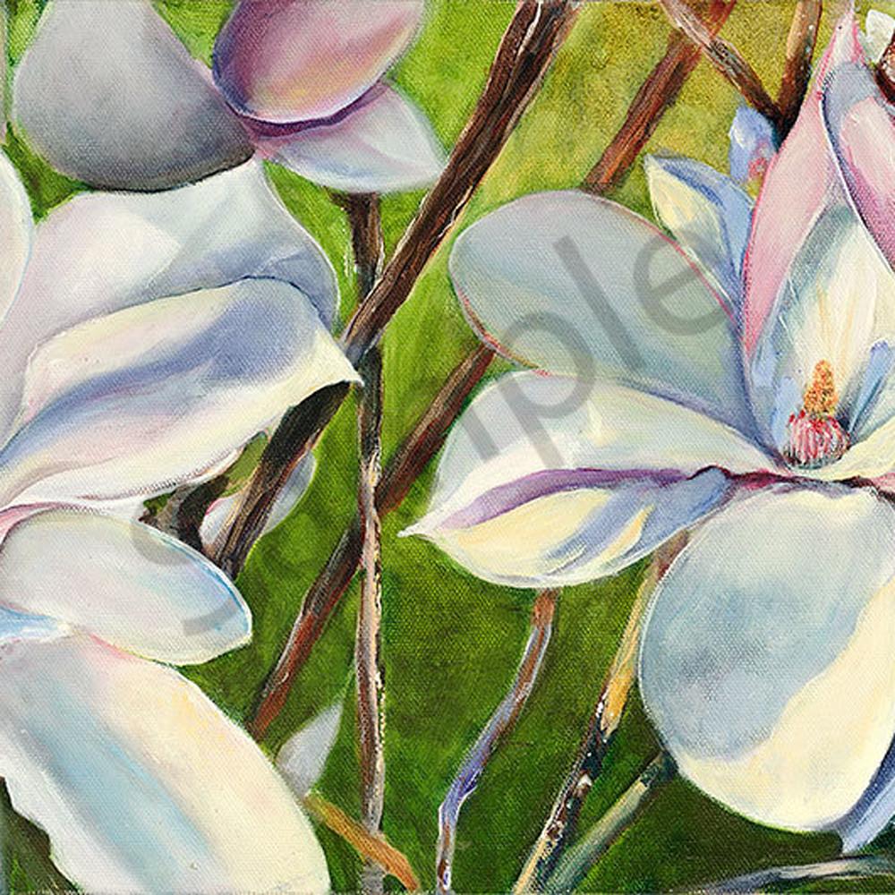 Magnolia nrs4uf