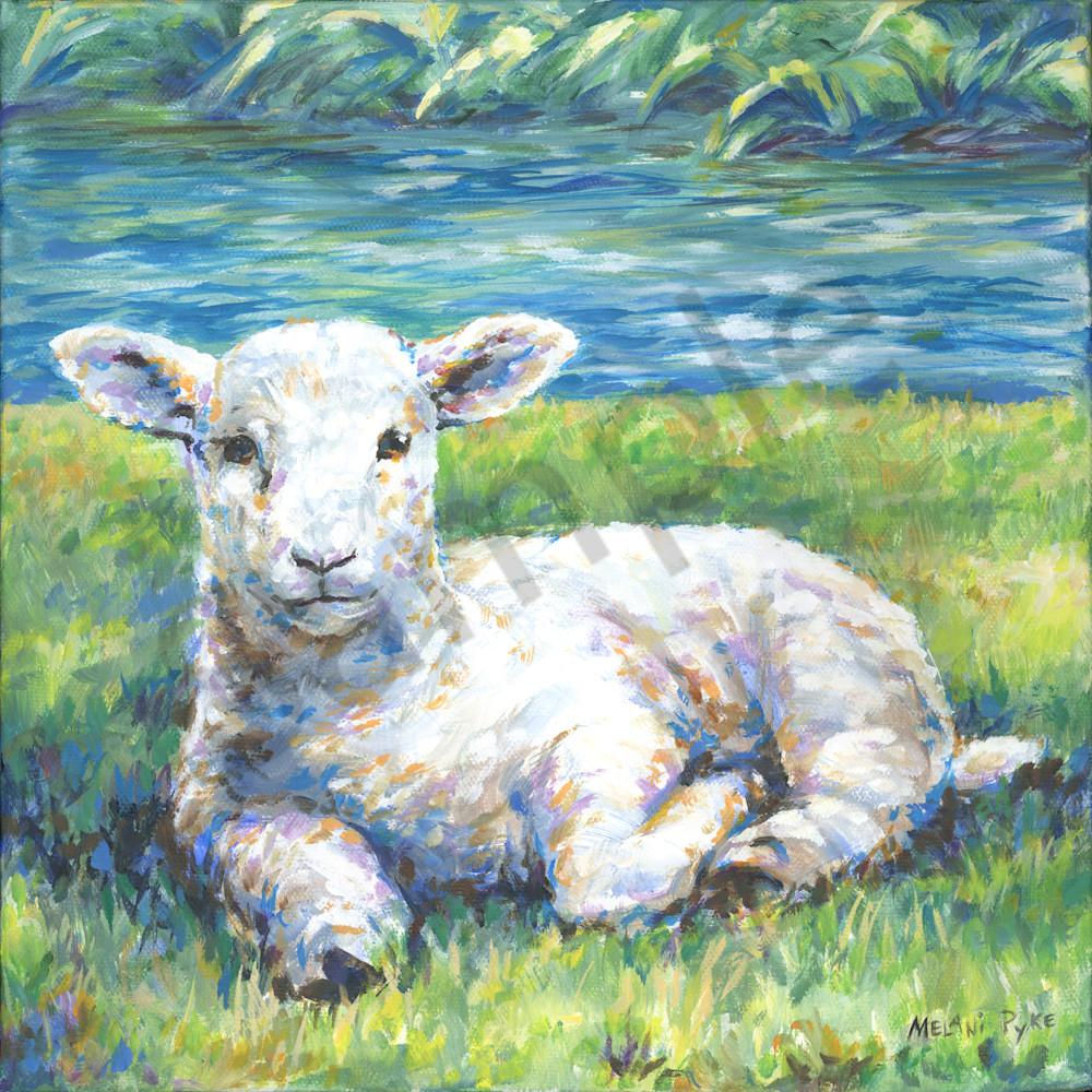 The lamb by melani pyke oyijyi