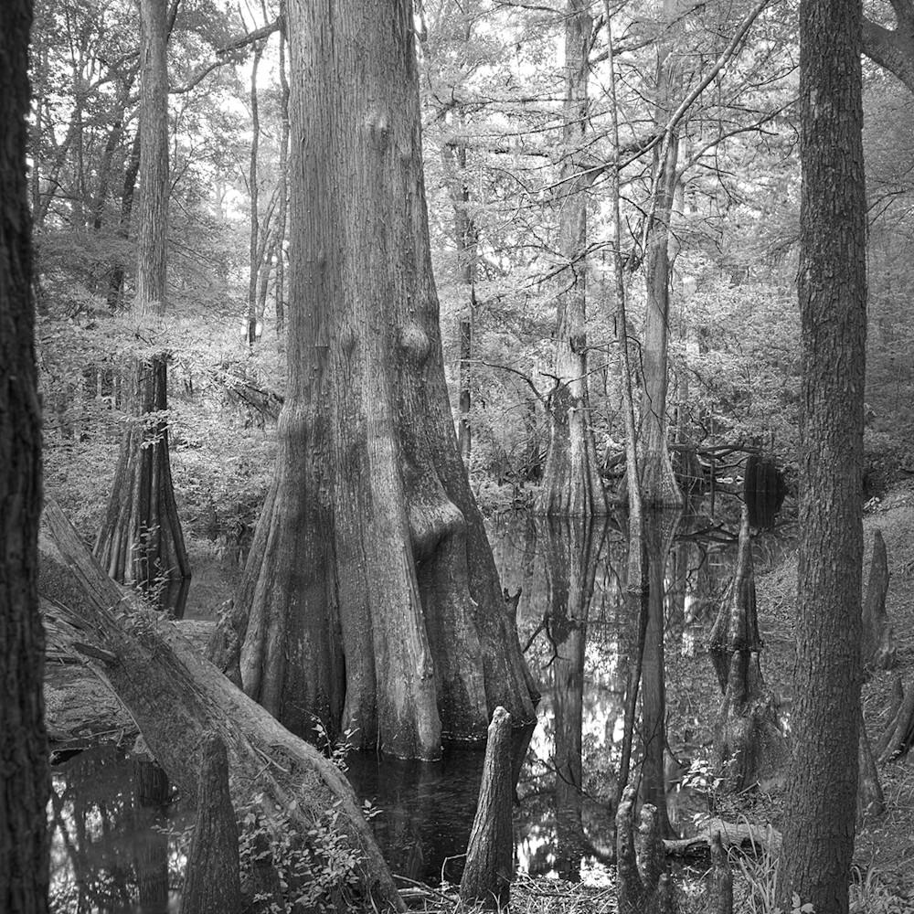 8193 bl wh 4x6 suwanee v tree soc1rt