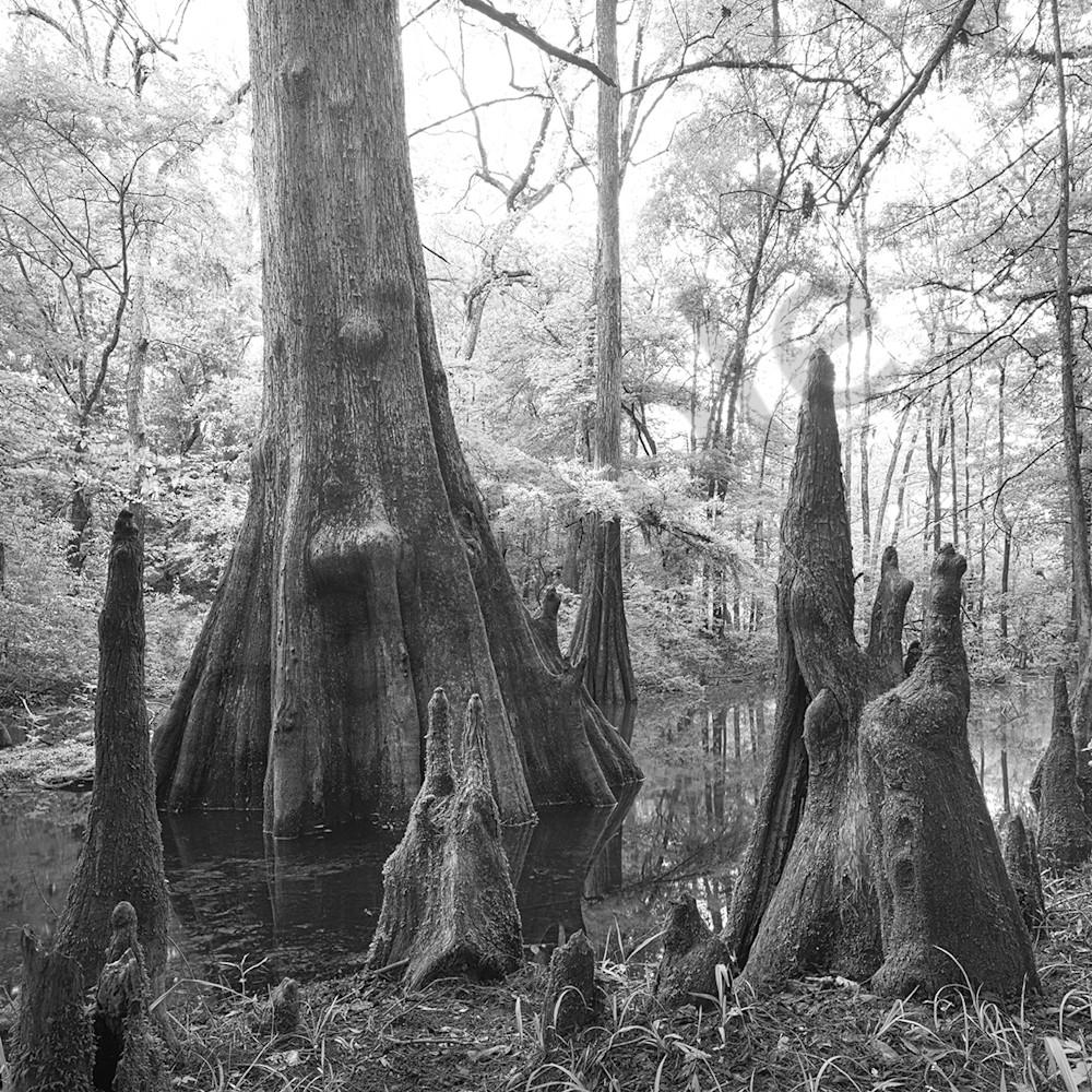 8243 bl wh wuwanee tree rtuiyd