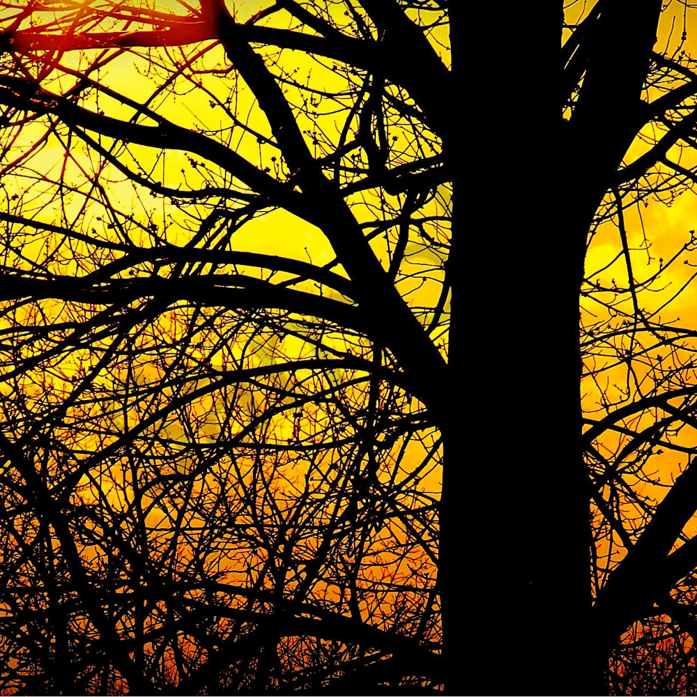 Silhouette of kentucky tree in the spring fnlbxi