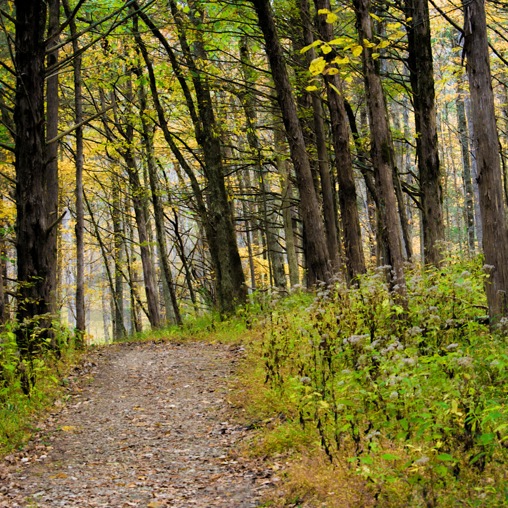 Pathway through the woods   dsc1645bbbbb swrr2l