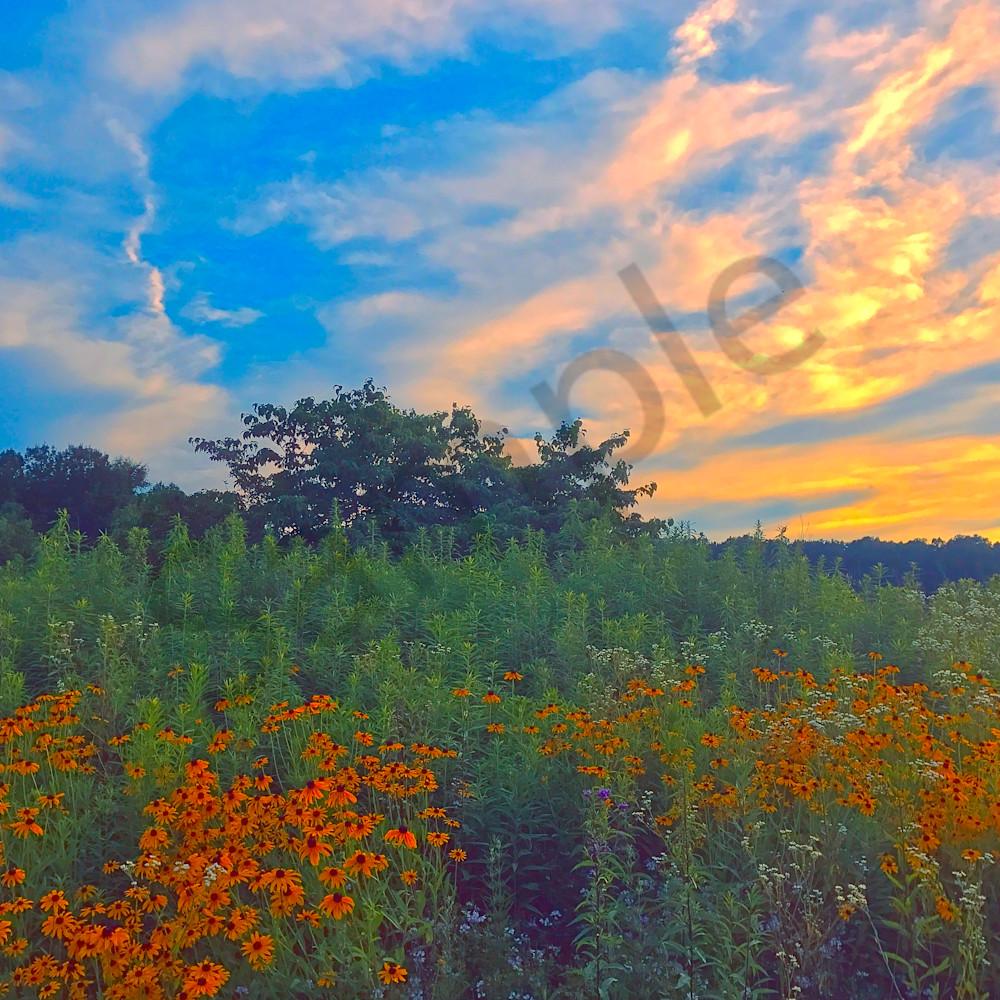 Field of summer website paozkq