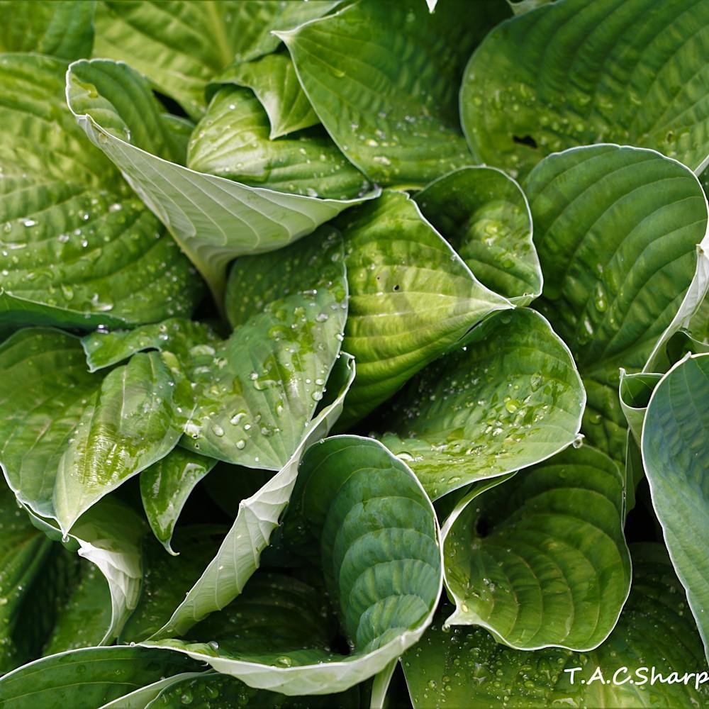 Plant 4264952 copy abqjw4