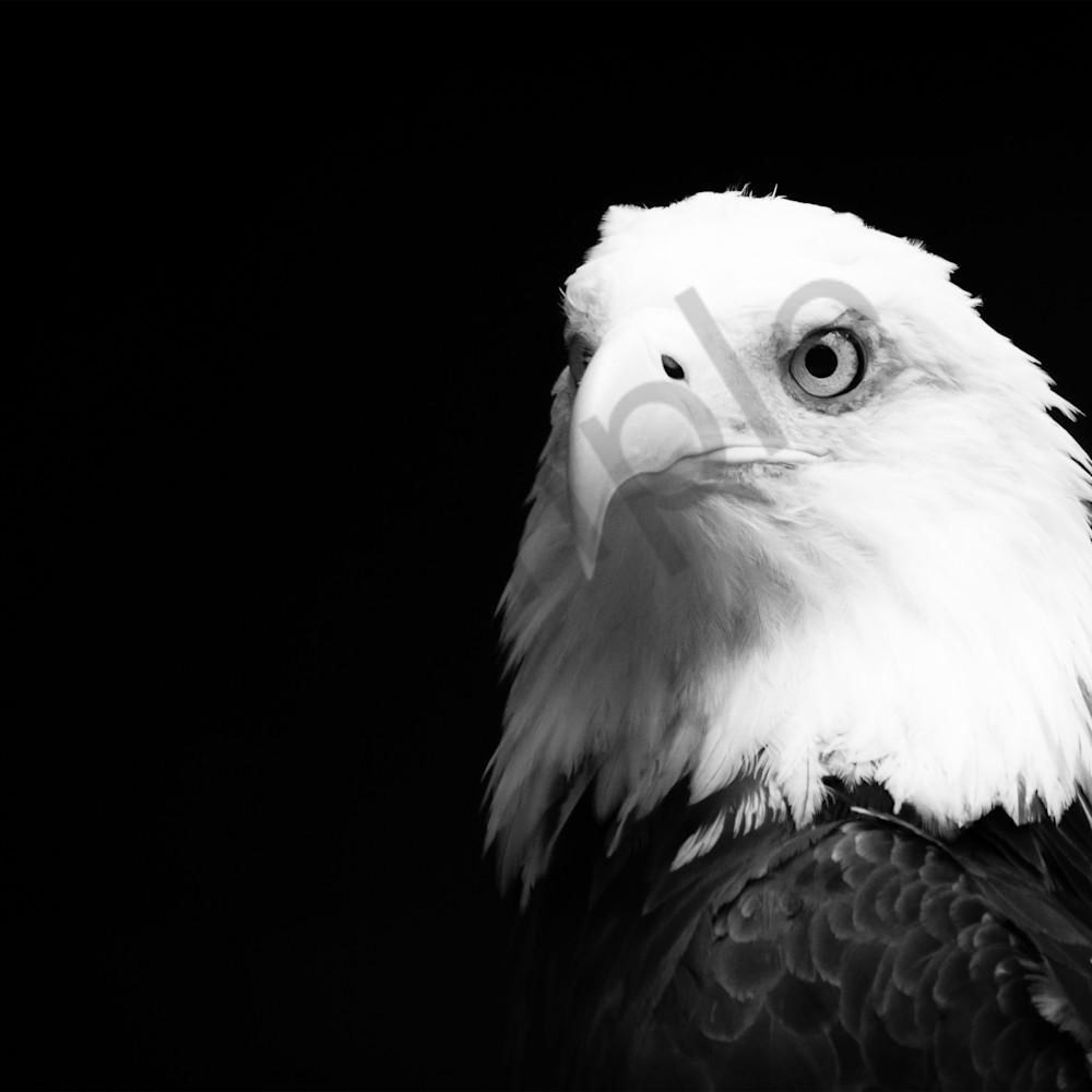 Eagle bw 16x12 qcndzb