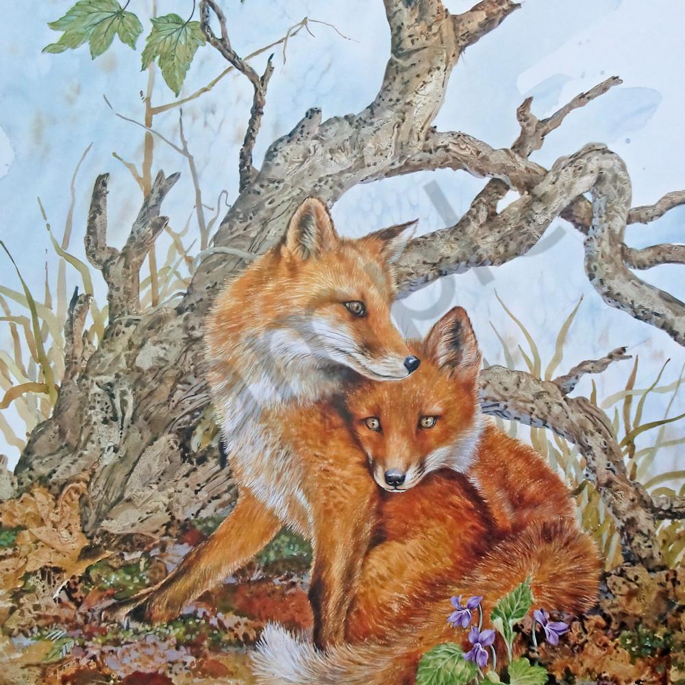 Foxes by jean pierre debernay jkzyi3