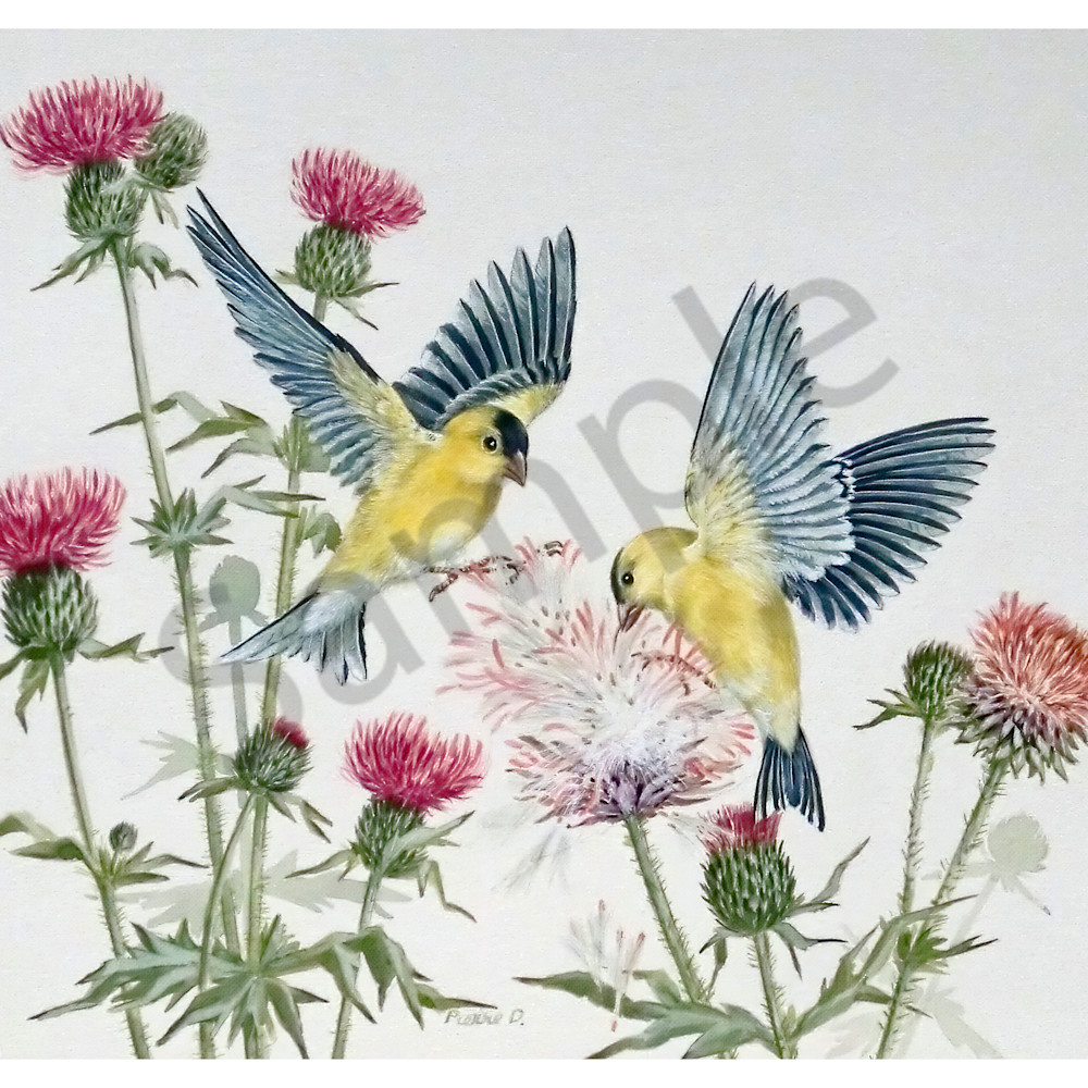 American gold finches by jean pierre debernay ist15b
