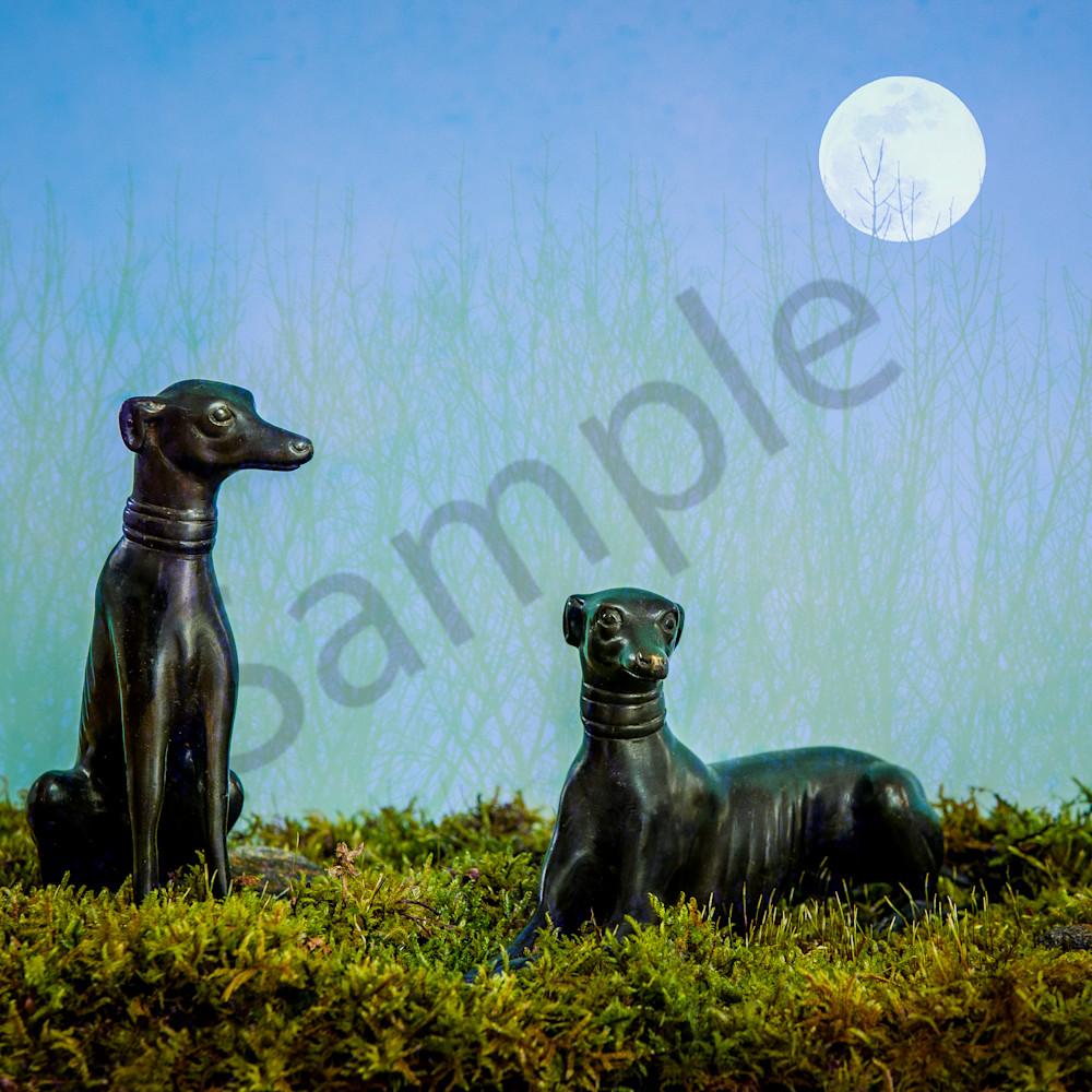 Moon dogs qw9tli