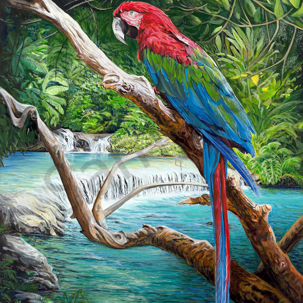 H mitra 004 the scarlet macaw 2000px oxq2cf