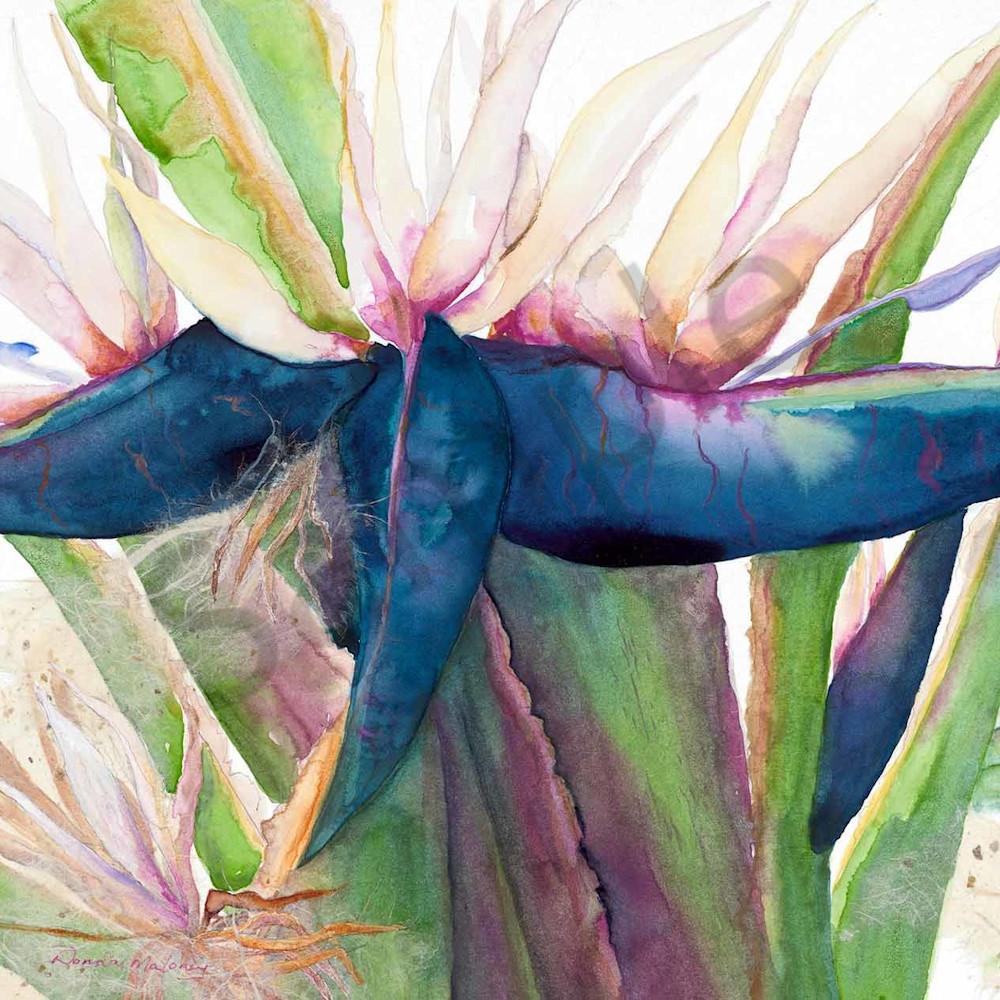 Donna maloney 024 tropical paradise 3 2000px ujikwi