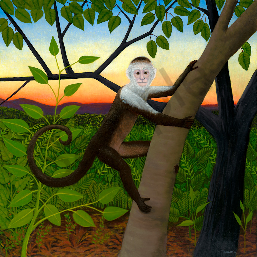 Monkey asf ctact8