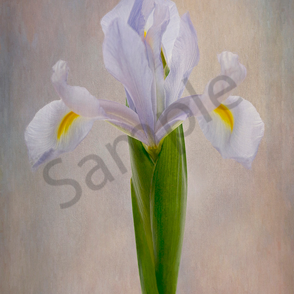 Blue iris vpblop