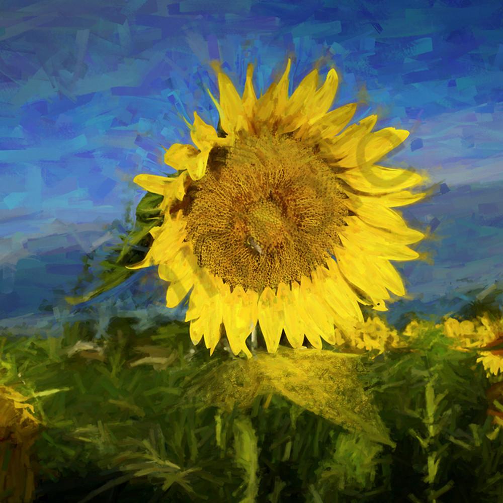 Fading sunflowers jktemi