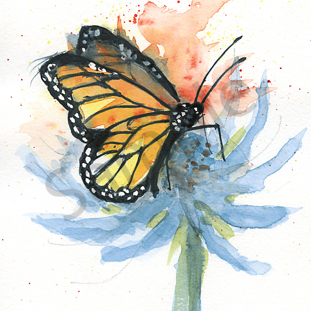 Butterfly 1 mtvetu