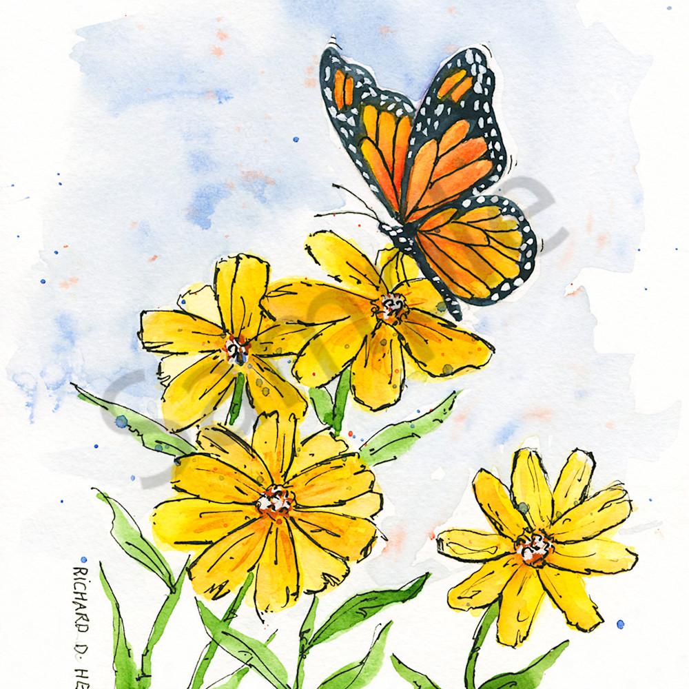 Butterfly 4 zppak5