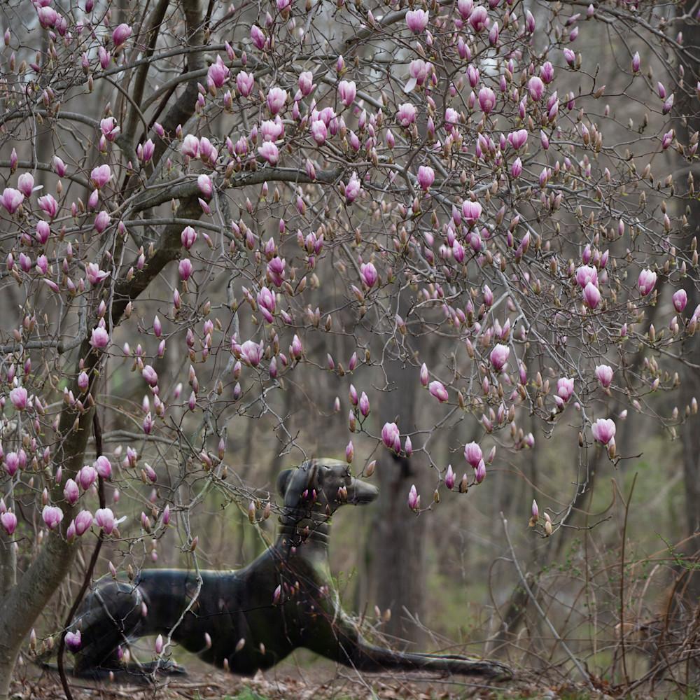Spring blooms qkttcw
