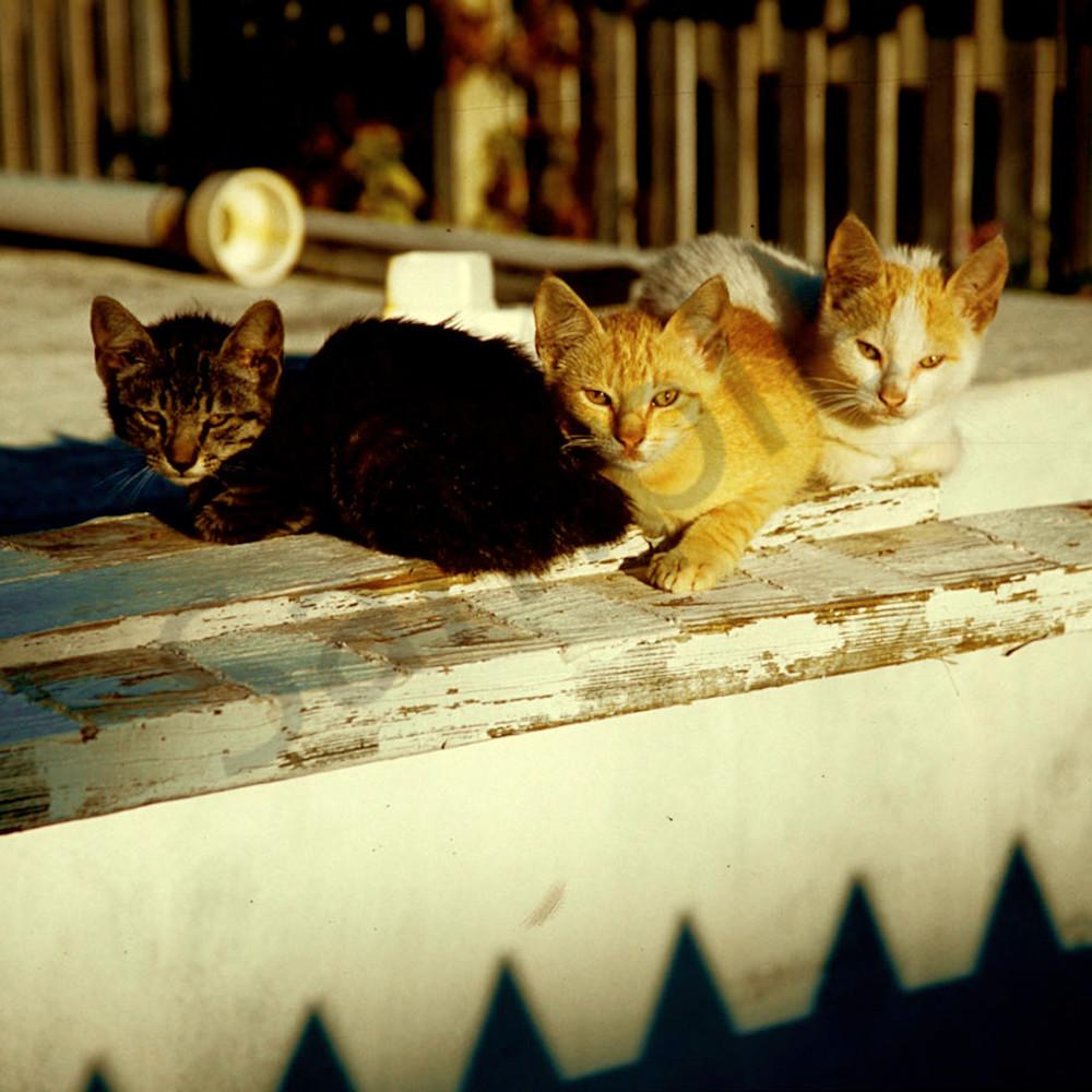 Cats1bah ss1qyz