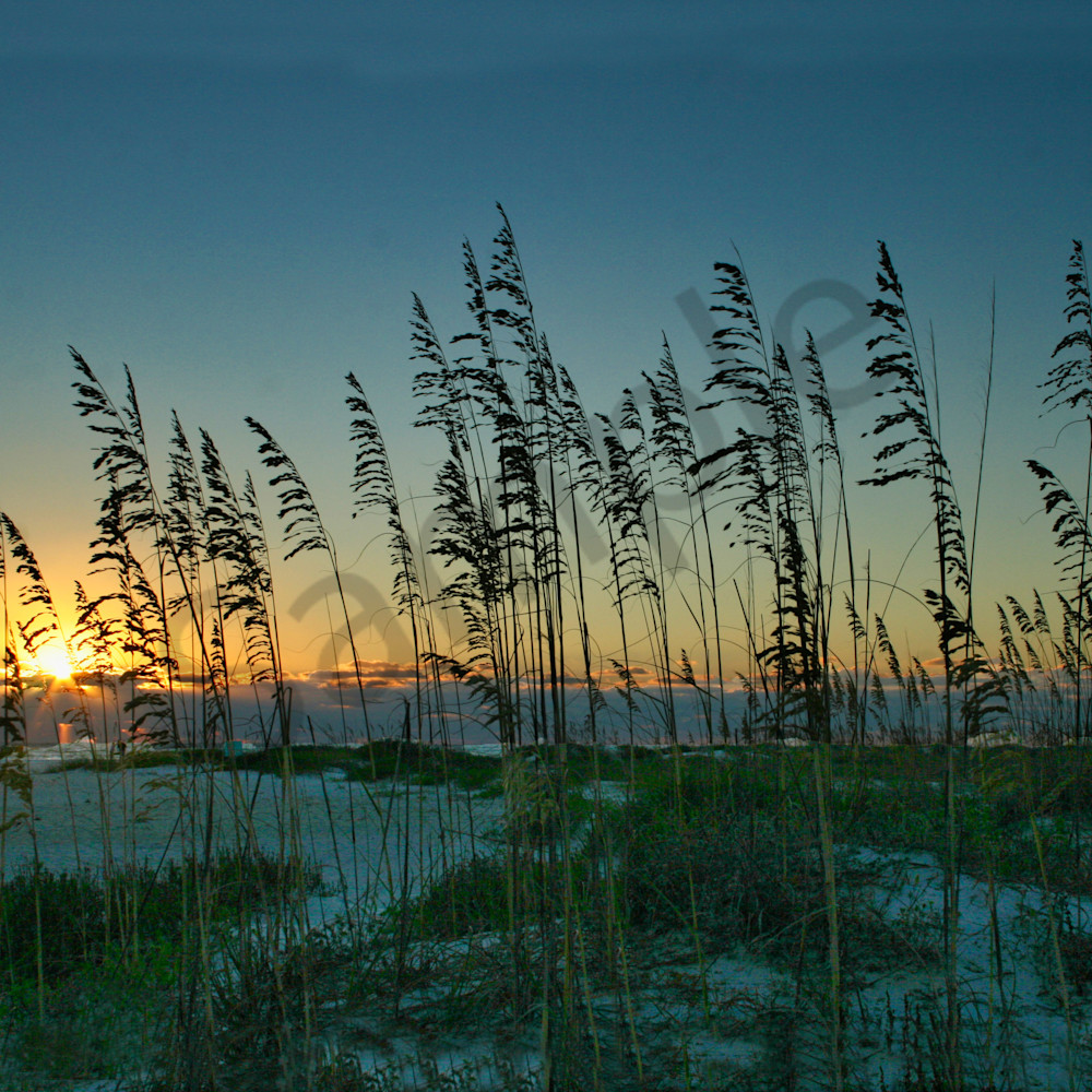 Sunset and sea oats dt66ig