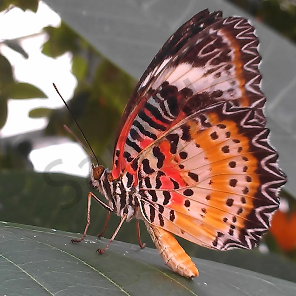 Imag0559 4 butterfly from cincinnati conservatory zljjhq
