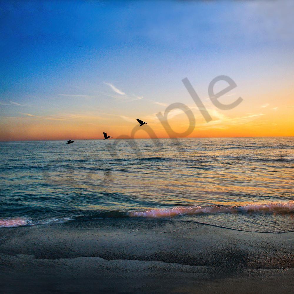 X 3 pelicans taking off f7becv