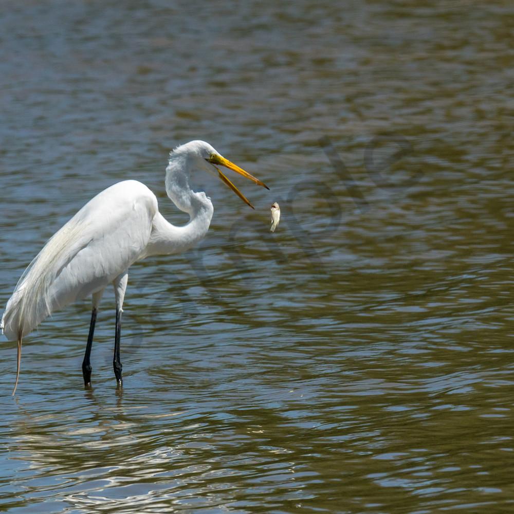 White egret fish flip lakcxb