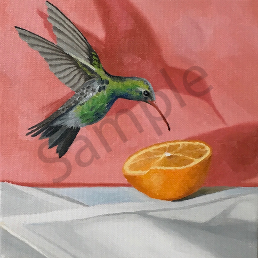Hummingbird veakjx