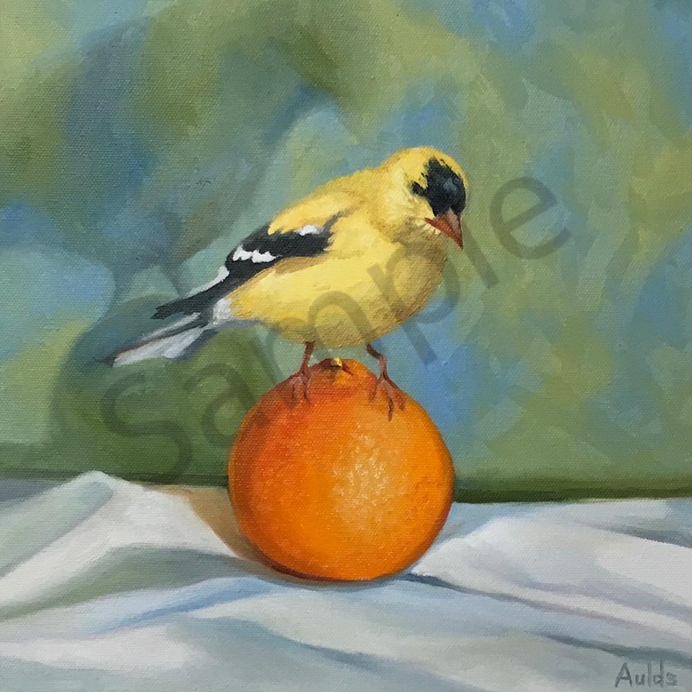 Goldfinch tsr1nq
