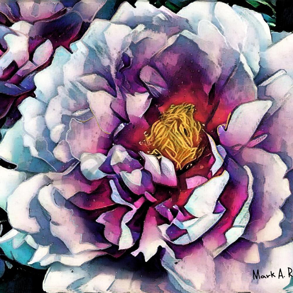 Peonies by mark rouse olwbnq