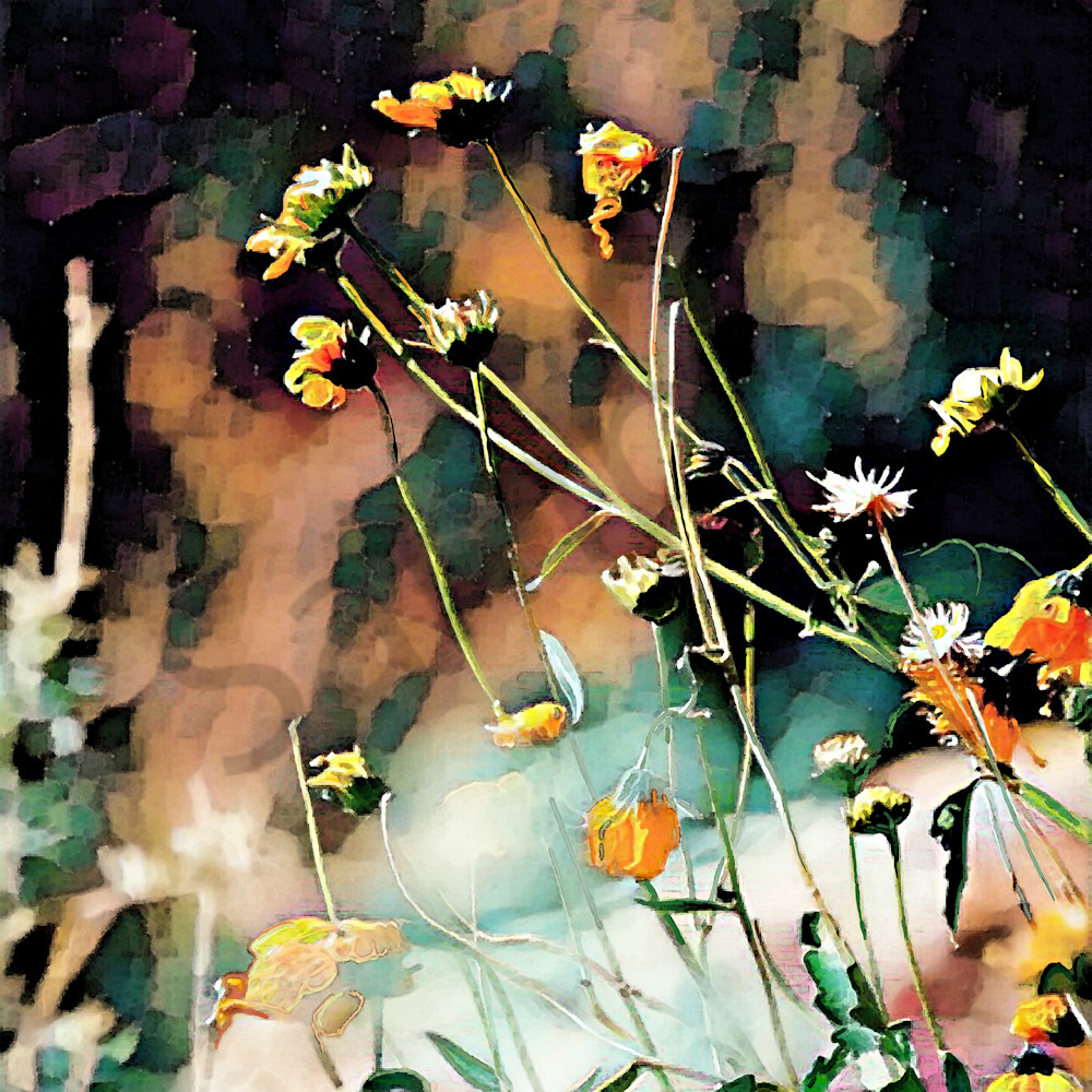 Wildflowers by mark rouse sods2i
