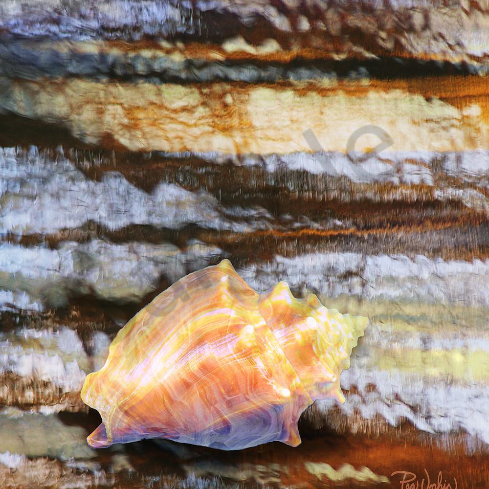 Conch shell z8lhnx