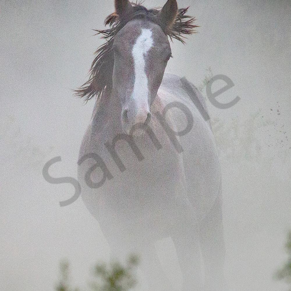 0085 dark horse running dust 4x6 puvigw
