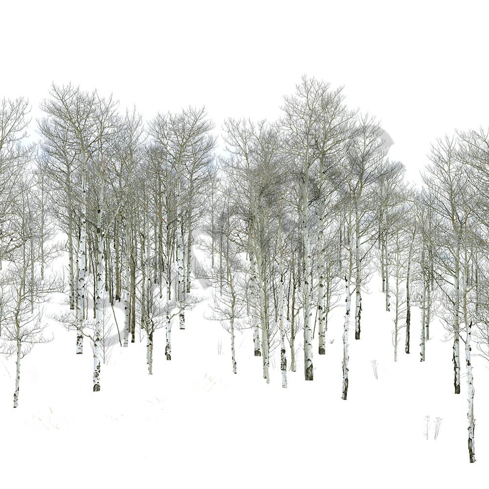 Winter walk wycm1x