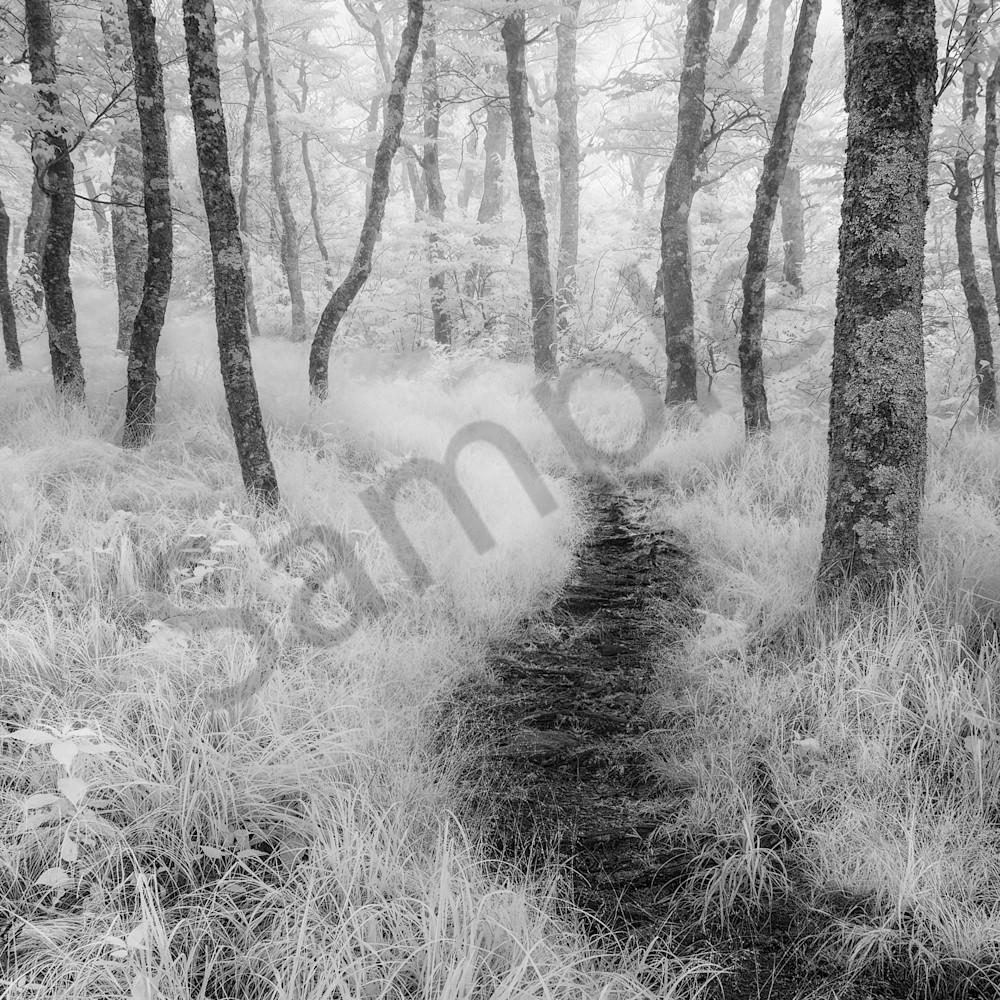 Rambling through forest fog i 22 x 14 wejhcp