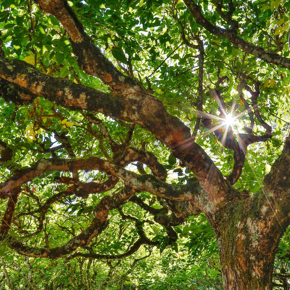 Awakening of the trees 20x 30 nmsapd